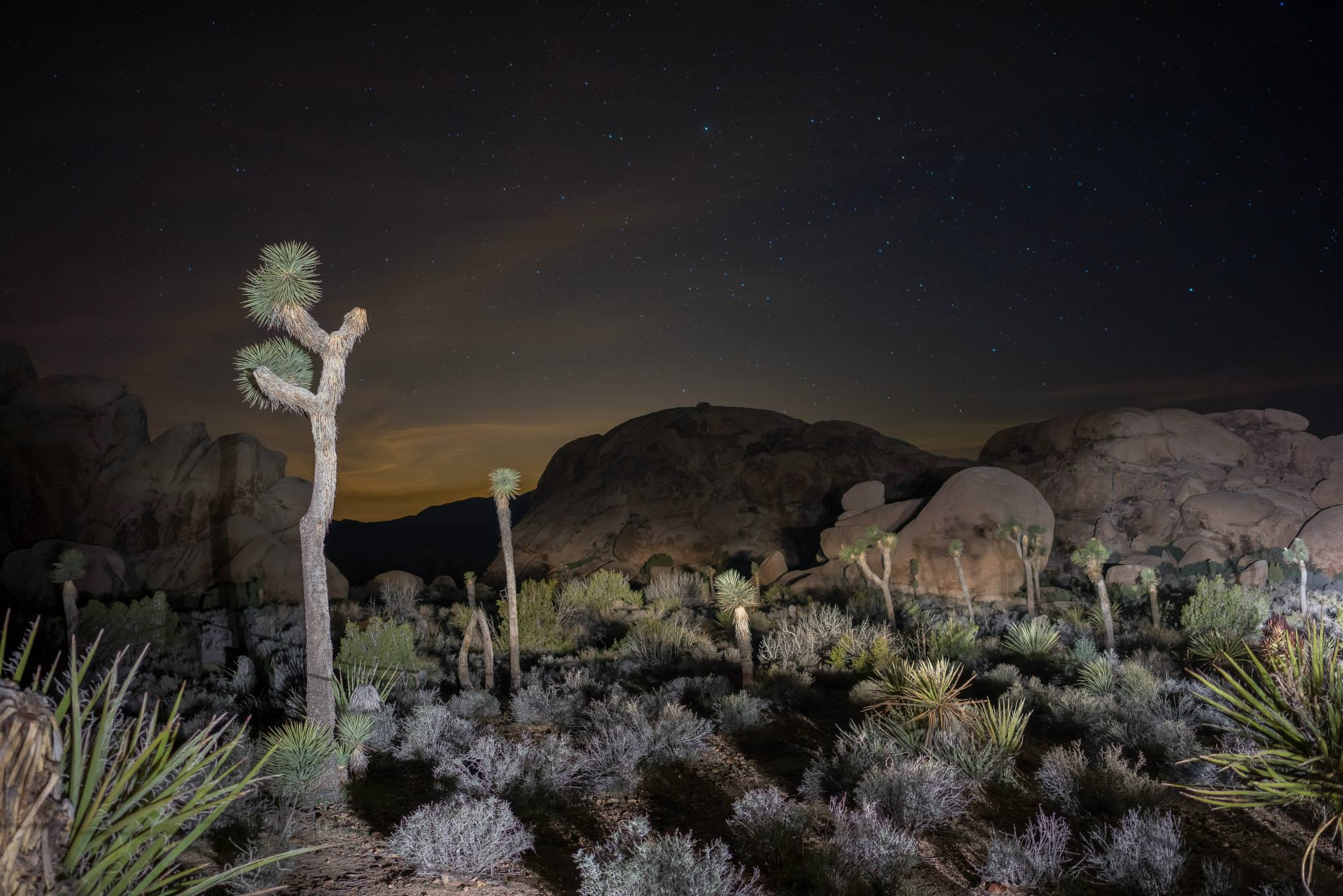 Joshua Tree Night Landscape